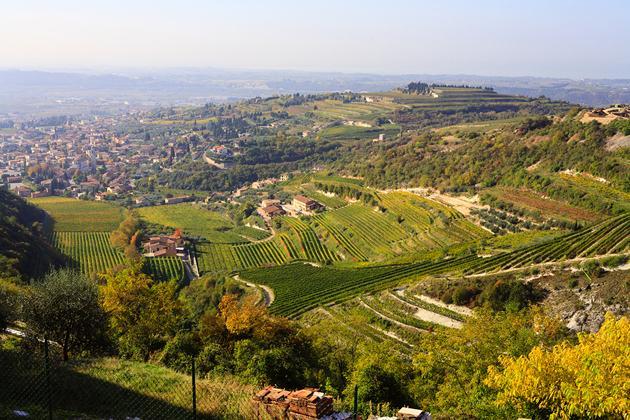 Magnalonga Settembrina - Gourmet wandeling - Negrar, Valpolicella
